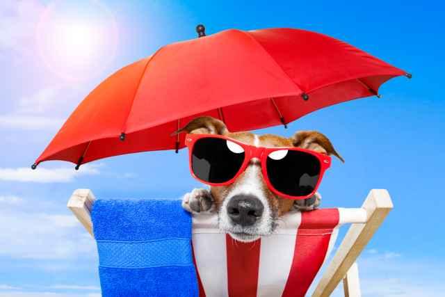Τα άστρα το Σαββατοκύριακο. Το καλοκαίρι είναι εδώ και μας προσκαλεί να το χαρούμε!