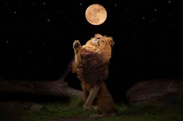 Νέα Σελήνη στον Λέοντα. Πώς επηρεάζει τα ζώδια. Από τη Ρένα Μεντάκη.