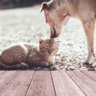 Ποιός σκύλος ταιριάζει στα ζώδια