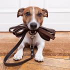 Τι μπορείς να μάθεις από ένα… σκύλο, ανάλογα με το ζώδιό σου!