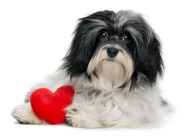 Ποιος σκύλος ταιριάζει στον Σκορπιό