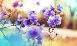 Αφιέρωμα στην αγάπη: οι σχέσεις, το σύμπαν και η άνοιξη!